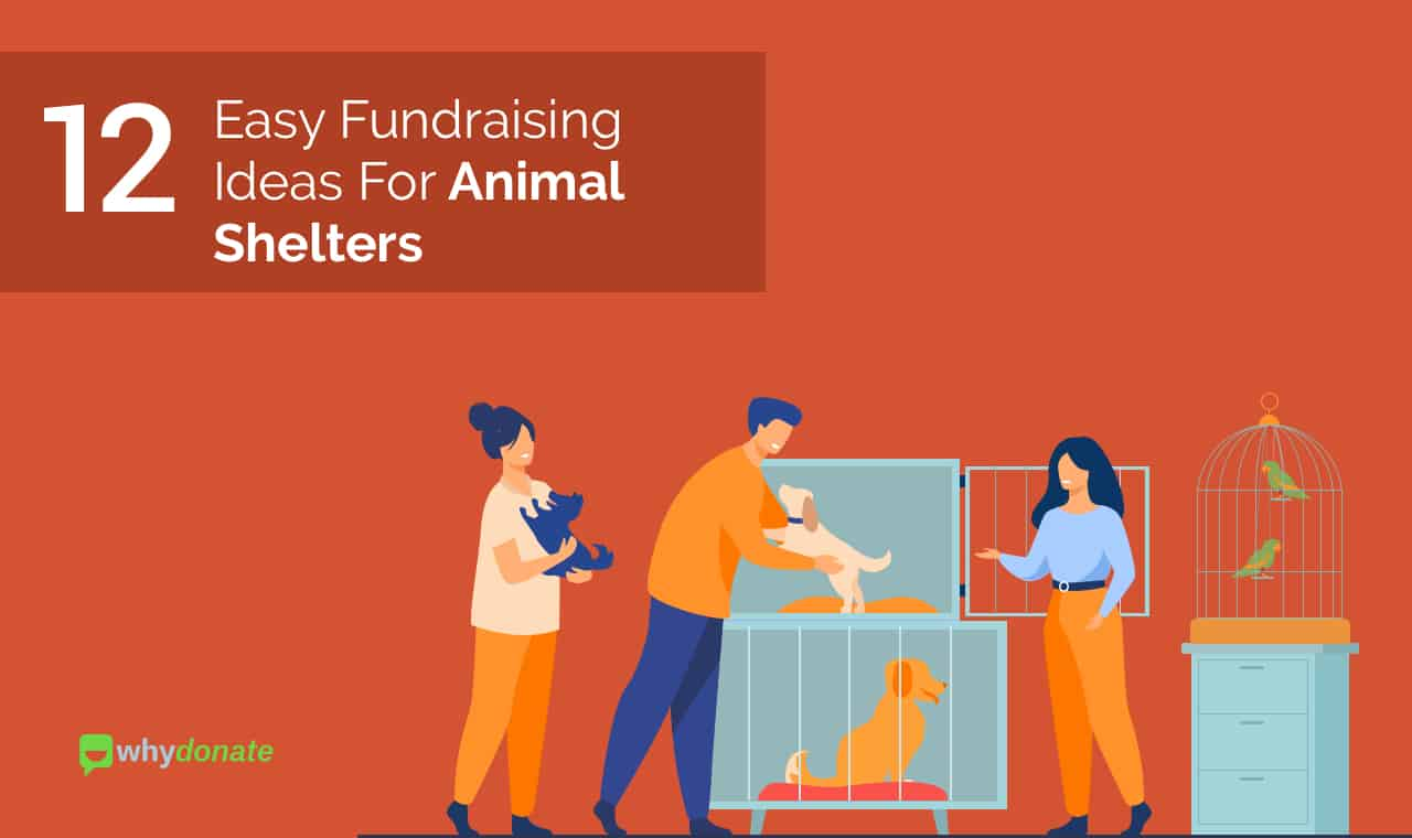 Fundraising ideas for animal shelters