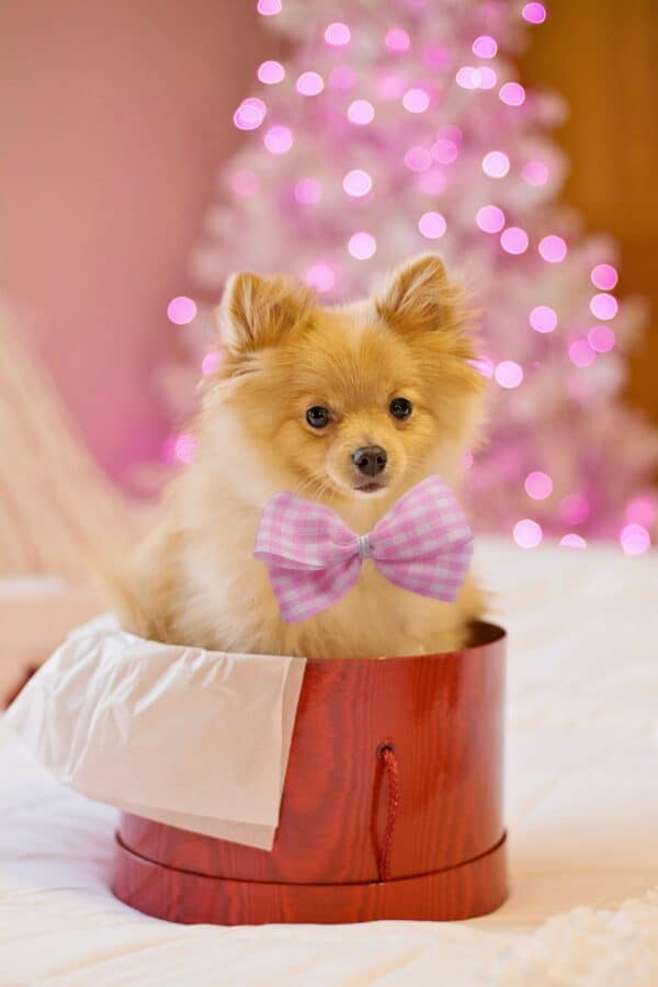 Fundraising for animal shelters - pet dressup