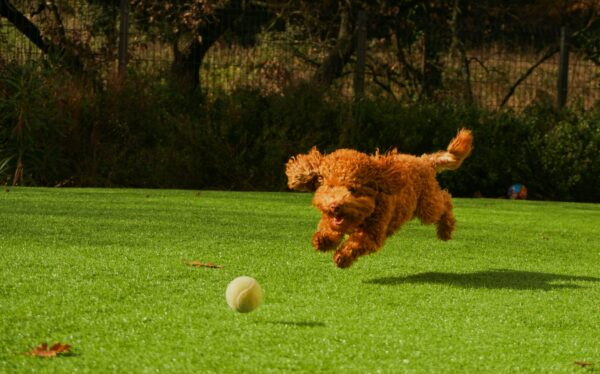 Fundraising for animals - pet sports